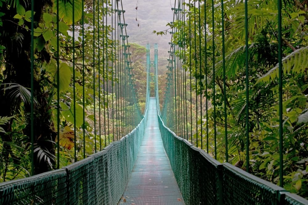 Hanging Bridge Monteverde Cloud Forest Costa Rica