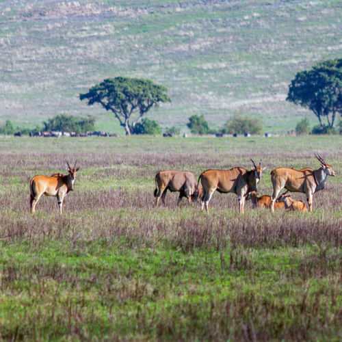 Tanzania - The Ngorongoro Crater: Best Spot in Tanzania for the Big 5