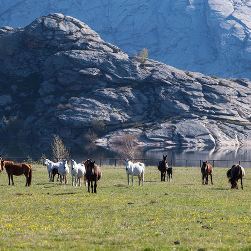 Mongolia - Altai: The Nature Reserve Known For Dinosaur Fossils