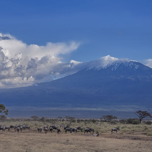 Kenya - Amboseli National Park - In the shadow of Kilimanjaro
