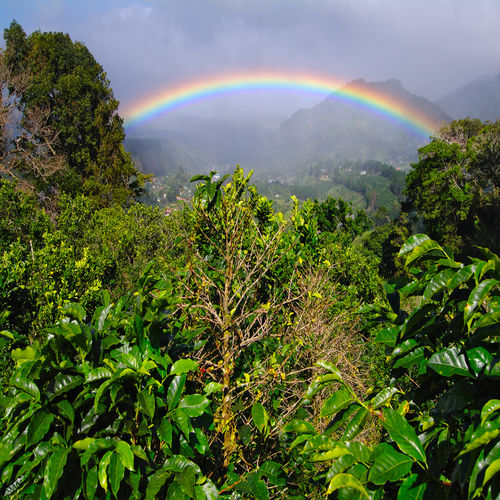 Panama - Boquete - The Land Of Rainbows