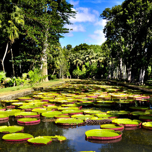 Mauritius - Visit the Oldest Botanical Garden in the Southern Hemisphere
