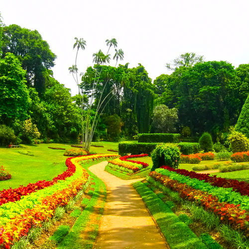 Sri Lanka - The Peradeniya Botanical Gardens in Kandy: Experience An Exclusive Naturalist Tour By An Acclaimed Botanist