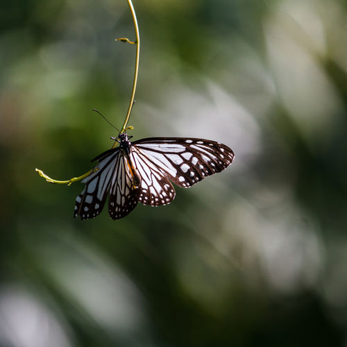 Laos - Kuang Si Butterfly Park: Visit The Famous Laos Butterfly Sanctuary
