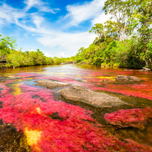 Colombia - Visit the Cano Cristales, dubbed 'the most beautiful river in the world'