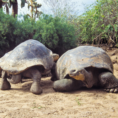 Ecuador - Cruise the Galapagos: Meet the Tortoises at Charles Darwin Station