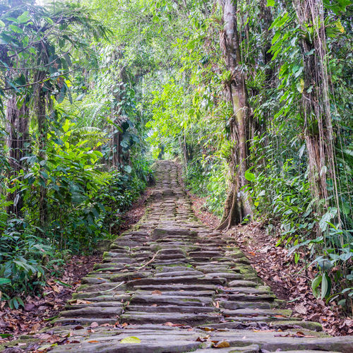 Colombia - Ciudad Perdida: Hike to Colombia's Lost City