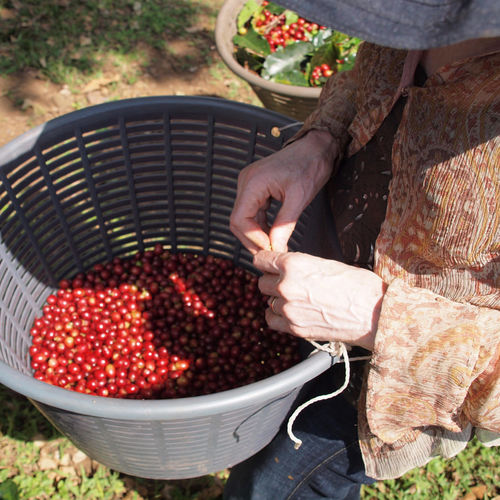 Costa Rica - Finca Rosa Blanca: The Heart of Costa Rica's Coffee Culture