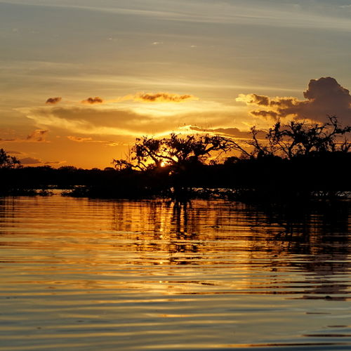 Ecuador - The Cuyabeno Wildlife Reserve: Explore Ecuador's Amazon