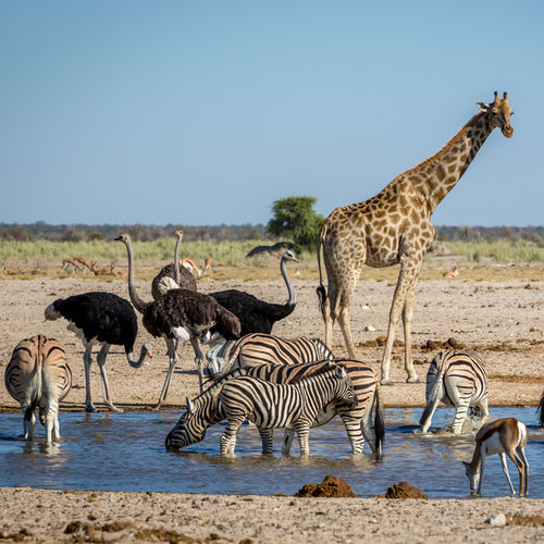 Namibia - The Big-Five At Etosha National Park