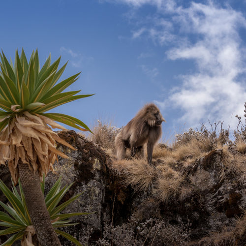 Ethiopia - Trek through the Semien Mountains National Park