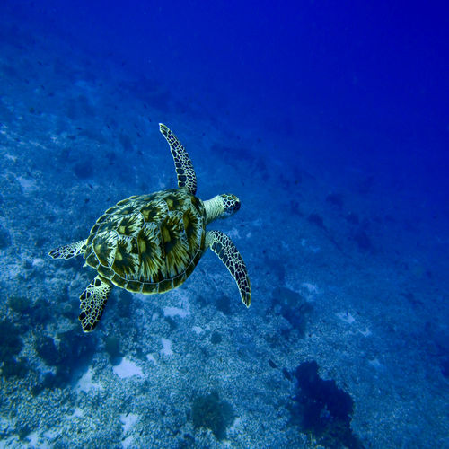 Indonesia - Gilli Islands - Dive In The Turtle Capital Of The World