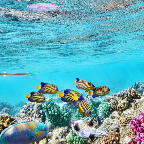 Australia - Haggerstone Island: The Great Barrier Reef In Utmost Luxury And Exclusivity