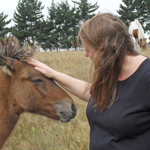 Iceland - Bond with Icelandic ponies and rescued animals at a petting zoo!