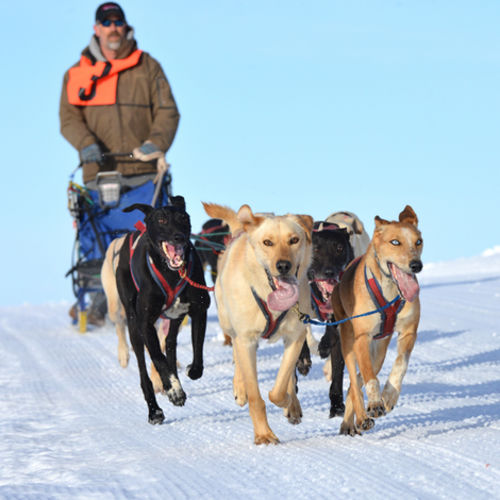 Alaska - Winter Trailing Through The Iditarod National Historic Trail