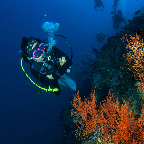 India - The Andaman Islands: Pristine Scuba Diving Among Emerald Forests