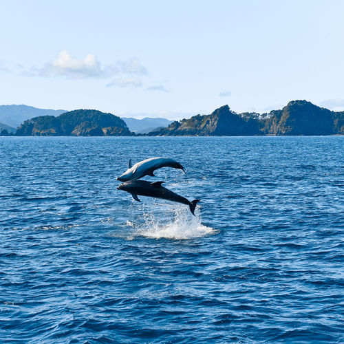 New Zealand - Go Wildlife watching in Beautiful Kaikoura