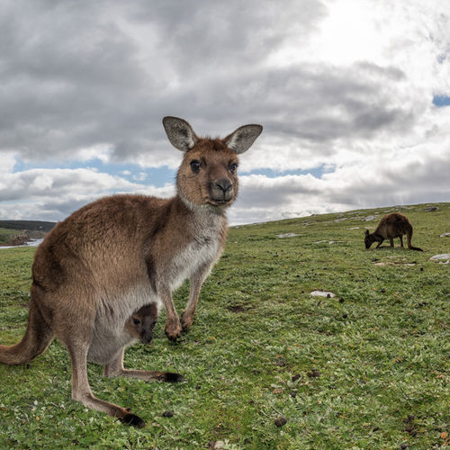 Australia - An exclusive private tour of Kangaroo Island