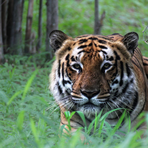 India - Madhya Pradesh: The Best Parks To See The Tiger
