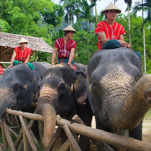 Thailand - Khao Sok National Park - Elephant Safaris