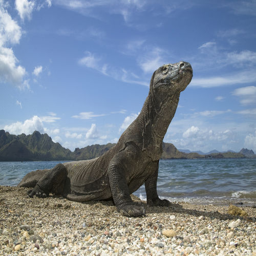 Indonesia - Komodo Island - Home To The World's Most Enigmatic Reptile