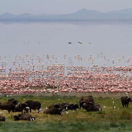 Lake Manyara, Tanzania, Flamingoes, Bird Watching, Wildlife