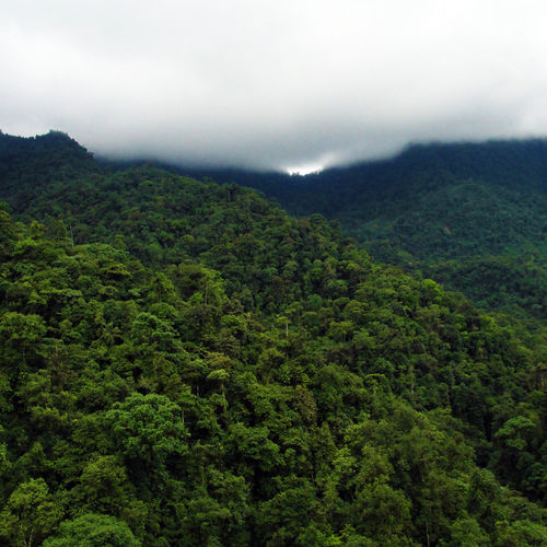 Mindo Cloud Forest, Ecuador