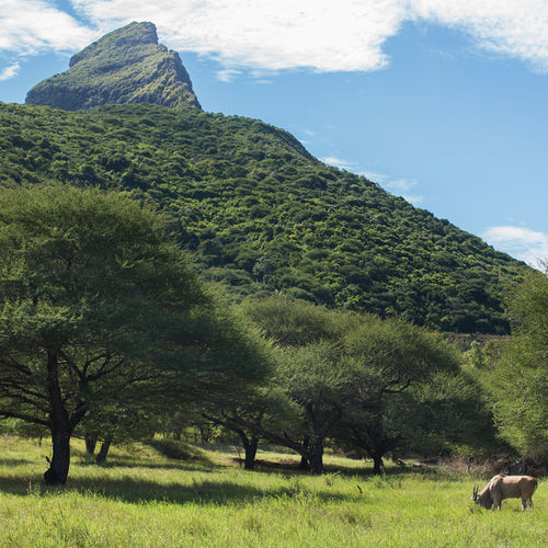 Mauritius - Frederica Nature Reserve: Wildlife, Adventure and Stunning Views