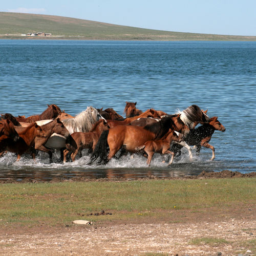Mongolia - Wildlife spotting in Mongolia's Magnificent Nature Reserves