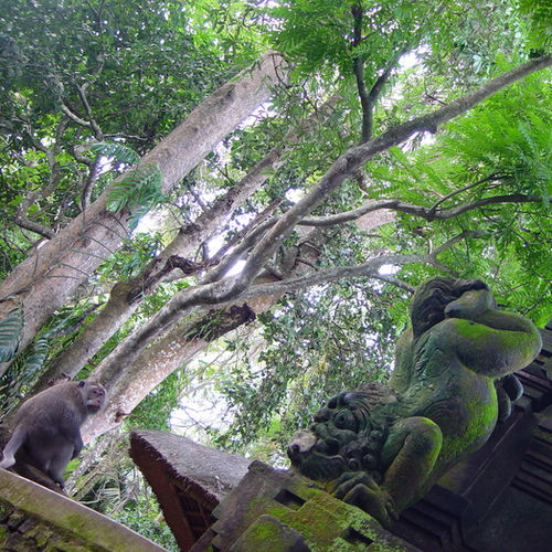 Indonesia - The Sacred Monkey Forest in Ubud: Wildlife and Ancient Temples