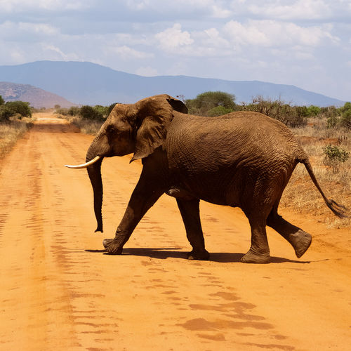 Tanzania - Tarangire National Park: The Best Elephant Spotting in Tanzania
