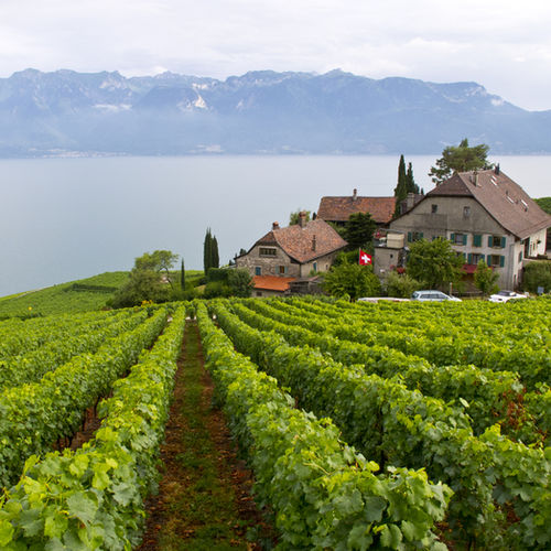 Switzerland, Alps, Lavaux, Hiking, Wine-tasting, UNESCO Heritage Site