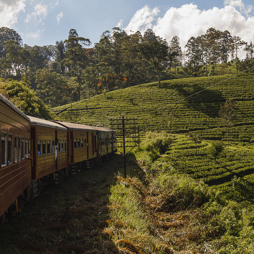 Sri Lanka - Kandy: Enjoy A Train Ride Through the Tea Plantations of Sri Lanka