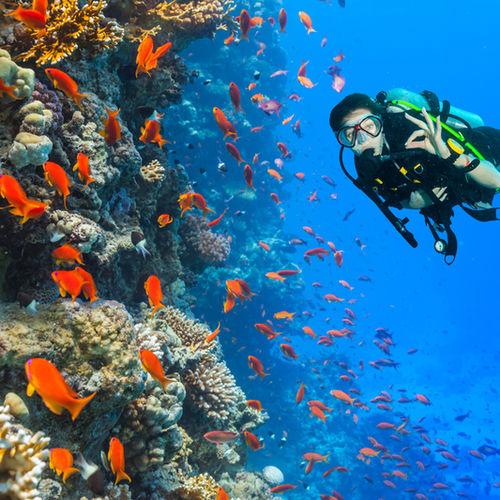Australia - The Great Barrier Reef: Dive into the Most Beautiful Coral Reef on Earth