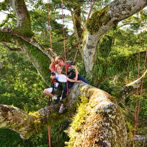 Brazil - Family Adventure! Climb A Mighty Amazon Tree!