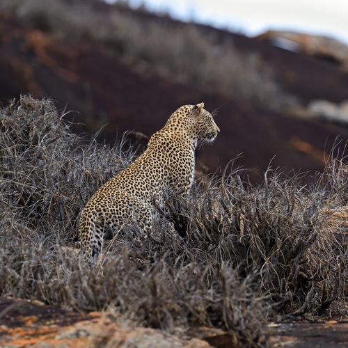 Kenya - Tsavo National Park - One of the largest parks in the world