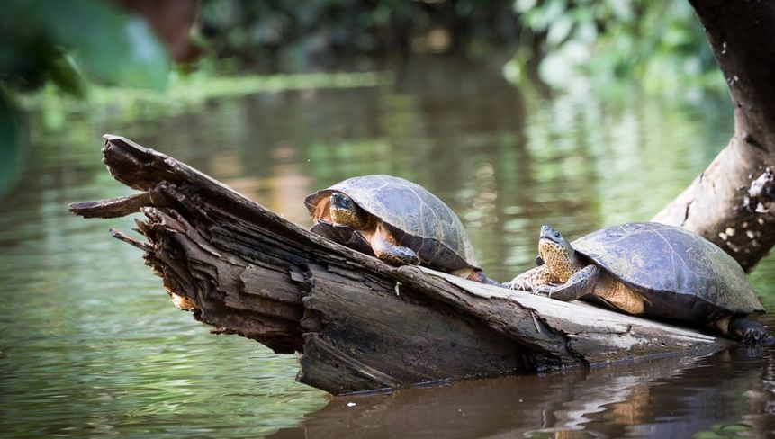 Costa Rica Travel: Things to do in Tortuguero National Park
