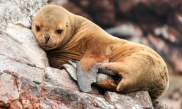 The Amazing Animals of the Galapagos Islands
