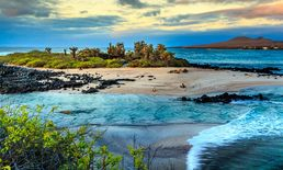 Travel to the Galapagos Islands: An...